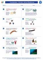 Invertebrates - Animals  without Backbones