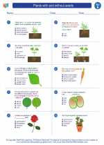 Plants with and without seeds