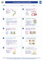 Chromosomes, Genes and DNA