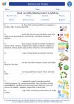 Bacteria and Viruses. 7th Grade Science Worksheets and ...