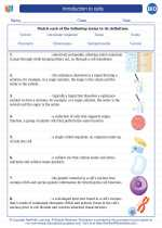 Introduction to cells. High School Biology Worksheets and ...