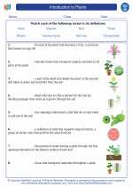 Introduction to plants. High School Biology Worksheets and ...